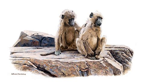 baboon paintings