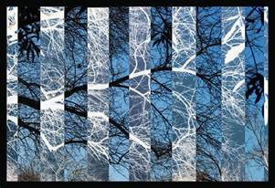 Order photograph blue black and white tree branches by jennifer