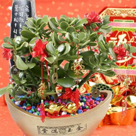 new year plants singapore jade plant indoor plants delivery plants