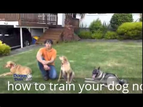 how to not to bark when left alone how to your not to bark when left alone