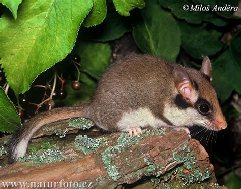 garden rodents types what are some different types of rodents that not many