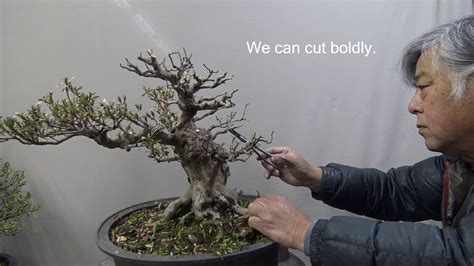 libro bonsai masterclass all you need bonsai master cut tree drastically for making new style youtube