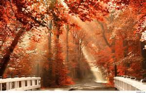fall season wallpaper