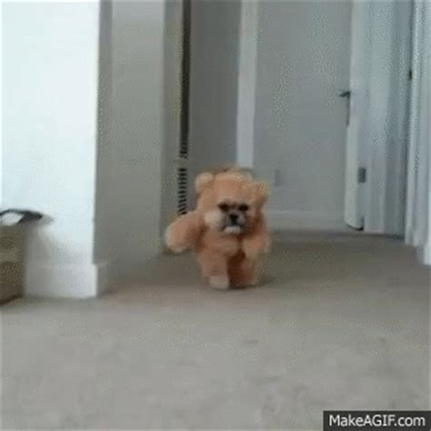 shih tzu gif munchkin the shih tzu teddy original on make a gif