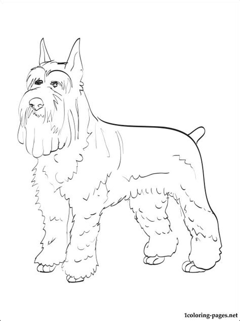 miniature schnauzer coloring page coloring pages