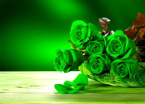 kopi hangat foto bunga mawar  cantik