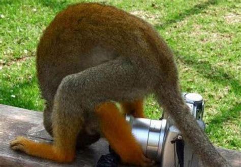 imagenes de animales graciosos con movimiento fotografias graciosas im 225 genes