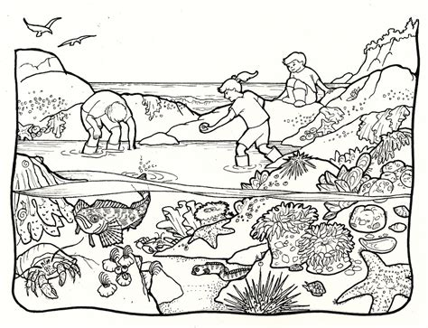 coloring book on tidal tide pools clipart clipground