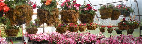 northwest bay nursery your deer resistant plant specialist in nanoose bay bc