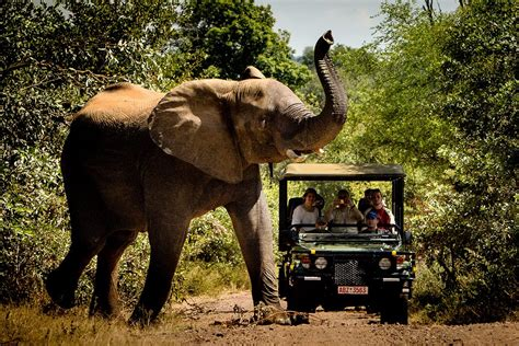 A Marvelous Take On The Safari Look With Out Of Africa by Experience A Safari Along The Banks Of The Zambezi River