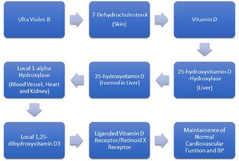 light box for vitamin d deficiency cureus does vitamin d deficiency lead to hypertension