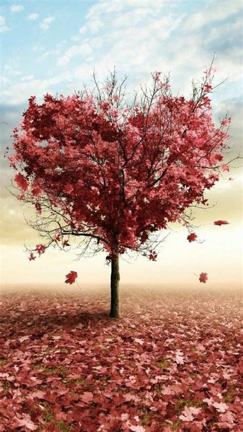 nature red love fall tree iphone   wallpaper