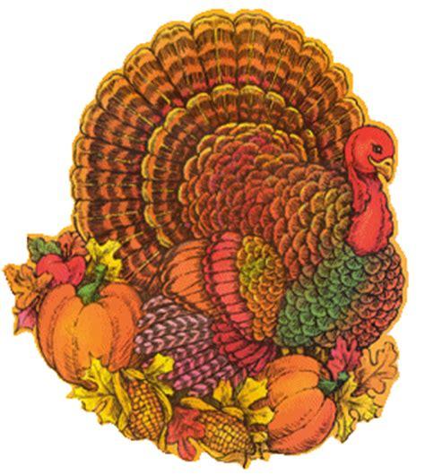 colored turkey american turkeys