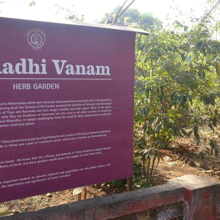 Detox Centre In Lonavala by Kaivalyadhama Lonavala What To Before You Go