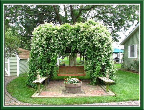 silver lace vine pergola vines pinterest trees lace and rowan