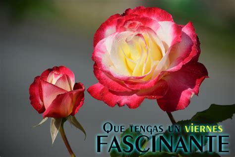 Imagenes Feliz Viernes Con Rosas | banco de im 225 genes para ver disfrutar y compartir