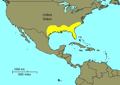 alligators in map american alligator facts and pictures reptile fact