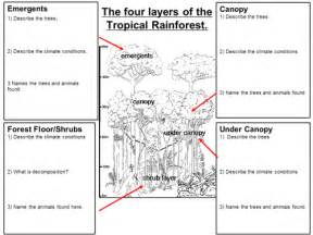 pictures rainforest layers worksheet getadating