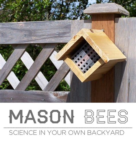 your own backyard 13 best images about mason bees on pinterest insect