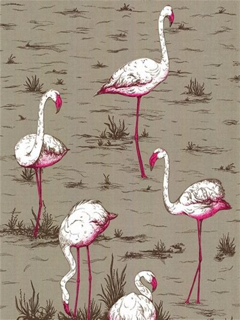 flamingo wallpaper sydney download john lewis flamingo wallpaper gallery