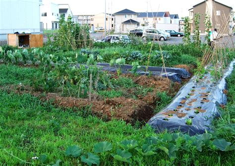 vegetable garden ideas triyae ideas for backyard vegetable garden various