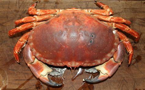 cuisson crabe dormeur cuire un crabe sans qu il perde ses pattes amafacon