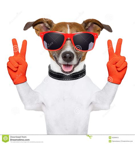 peace puppies peace and victory fingers stock photography image 30289912