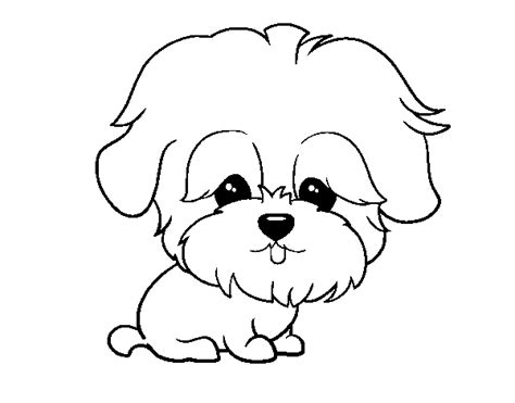 coloring pages of maltese puppies maltese coloring pages