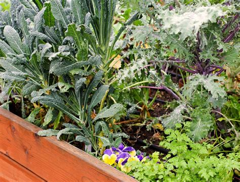 fall and winter garden wshg net time to plant your fall and winter garden