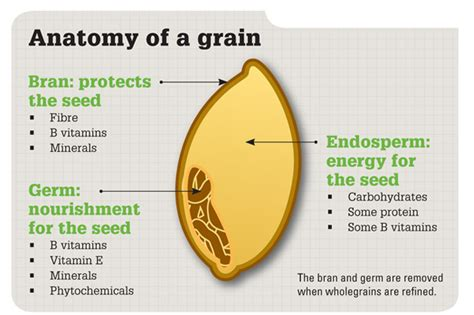 whole grains nutrients wheat here s to food