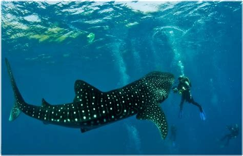 dive vacations scuba diving vacation in cebu city philippines trip to