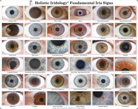 list of eye colors iridology chart iris eye colors chart iridology