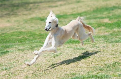 fastest breeds 10 fastest breeds pawculture