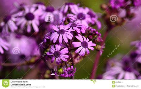 Welche Blumen Im Mai by Blumen Im Mai Blumen Im Mai Susi Testet Und Bloggt Maigl
