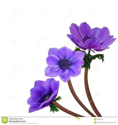Fleur Violette by Image Violette Fleur Photos De Magnolisafleur