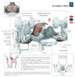 muscles used for bench press dumbbell press strength anatomy