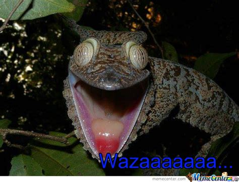 Wazzup Meme - wazzup gecko by recyclebin meme center