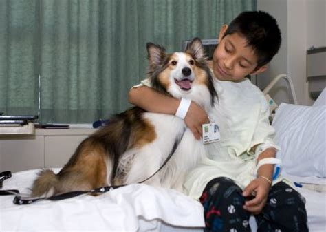hospital dogs did you a pet benefits your health mister spunky and his friends