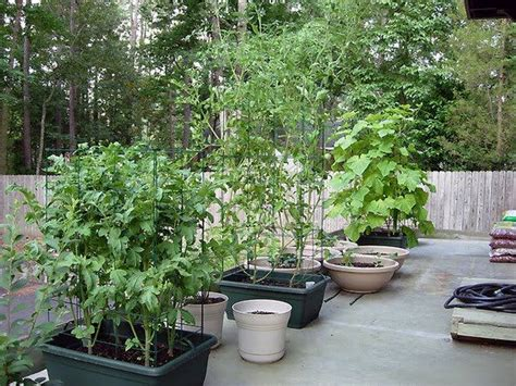 Organic Container Vegetable Gardening Container Garden For More Organic Gardening Ideas Visit