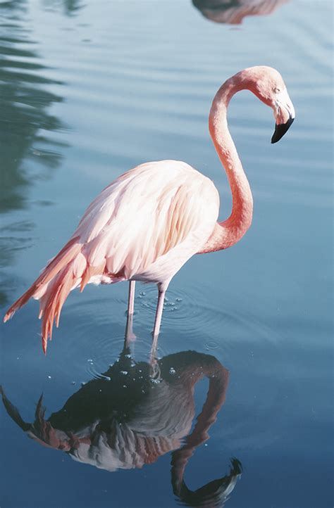 Eagle Flamingo Grey Blue bird photo gallery