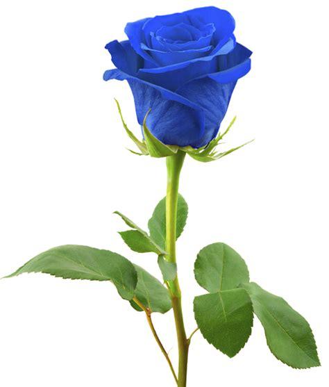 inps fiori omaggio funebre