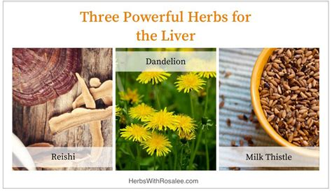 Ayurvedic Herbs For Liver Detox by Liver Cleanse