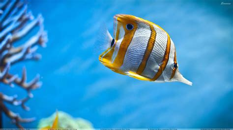 water fish fish in water www pixshark images galleries with a bite