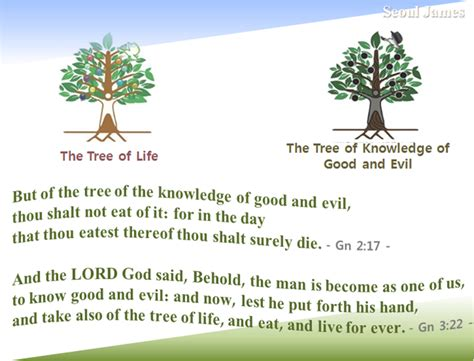 symbolism of a tree shincheonji quot good seed quot shincheonji testify the tree of life meaning the secrets of heaven