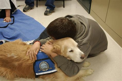 how to get a comfort dog dottordog lavori da cani dottordog