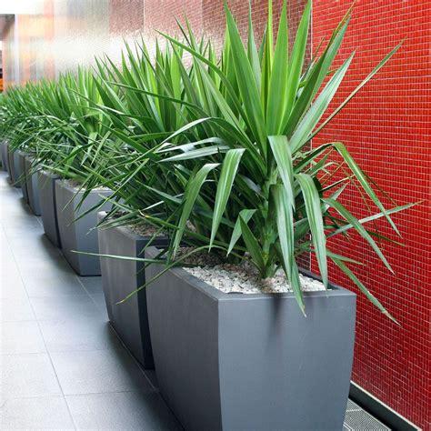 Lechuza Planters Australia by Container Connectioncabriolet Trough