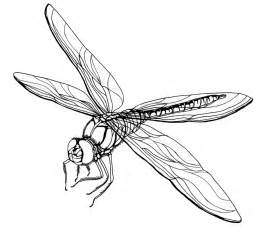 what color are dragonflies free printable dragonfly coloring pages for