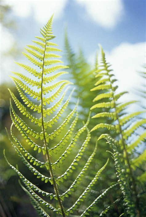 growing plants  fern spores  alan titchmarsh