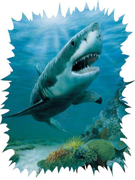 shark wall murals 252 72002 shark wall mural