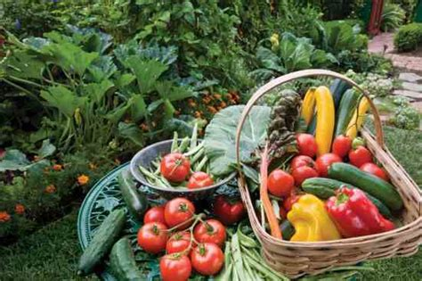 Garden Of Food 40 Gardening Tips To Maximize Your Harvest Organic